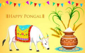 Happy Sankranthi 2018 Images, Quotes, Wishes Pongal Wallpapers – Whatsapp, Facebook Status