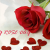 Happy Rose Day 2016 Images wallpapers pictures (16)